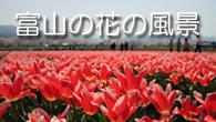富山の花の風景